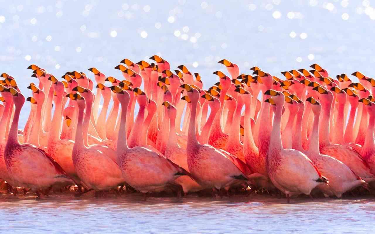 Pink Flamingos Wallpaper Top 10 das aves mais feias do mundo