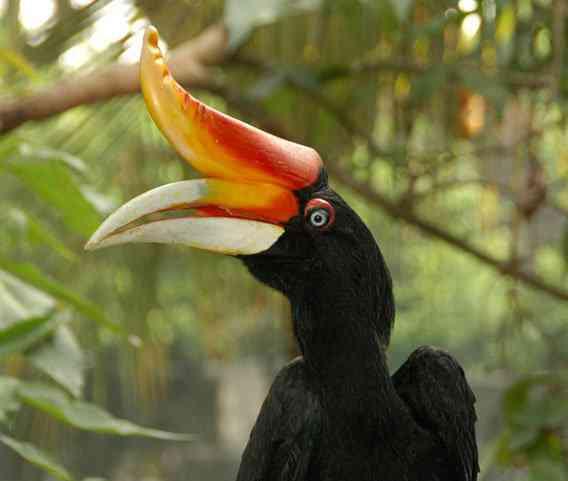 adia 2007 08 04 DSC 2814 hornbill in bird park malaysia kuala lumpur cringel.com  Top 10 das aves mais feias do mundo