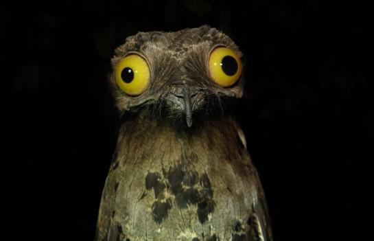 ik8rh03 Top 10 das aves mais feias do mundo