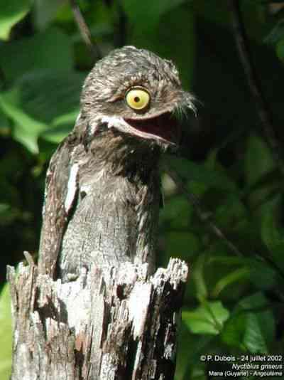 l dddcf9e0 cd19 11e1 b0d1 a1073fc00005 Top 10 das aves mais feias do mundo