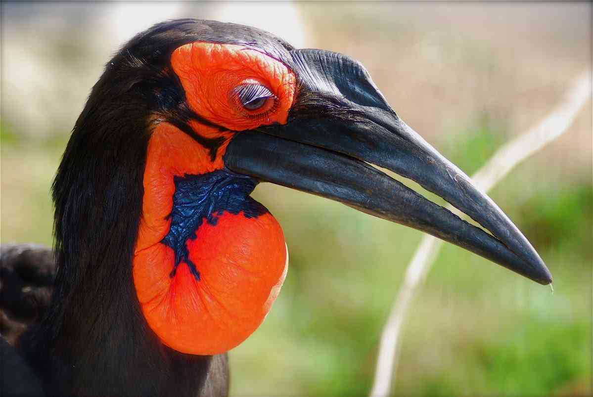 maxresdefault 5 Top 10 das aves mais feias do mundo
