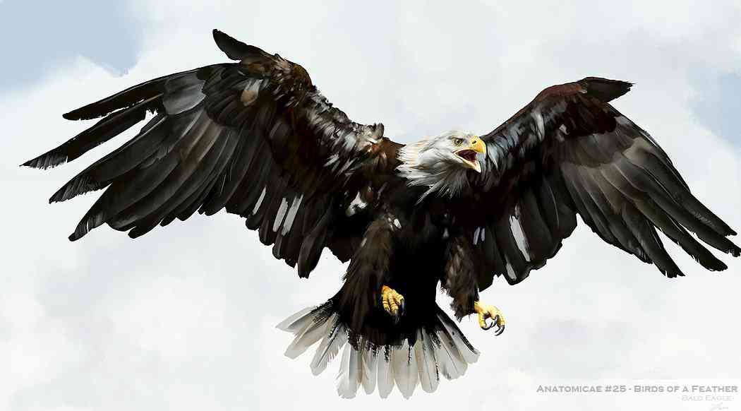 bald eagle study by sephirothsheart d4wt5wb Ultra gump blaster mega pack ultimate post de monstros  5