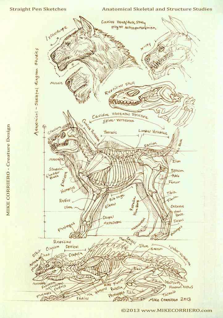 canine reptile skeletal diagram web  mike corriero 2013 Ultra gump blaster mega pack ultimate post de monstros  5