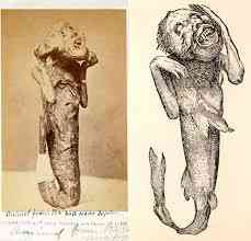 download 12 Investigadores independentes confirmam que a estranha múmia encontrada no deserto é de um extraterrestre. Será?