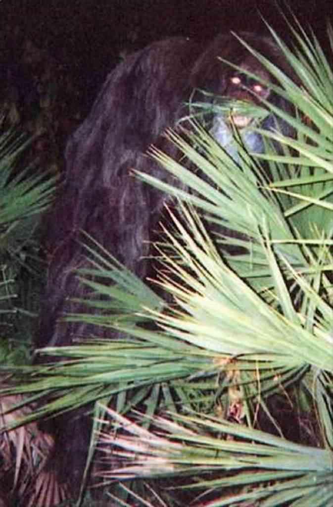 1e99368231b913d631ce4aad226214f4 673x1024 Foto gump do dia: Skunk ape, O macaco fedido da Flórida