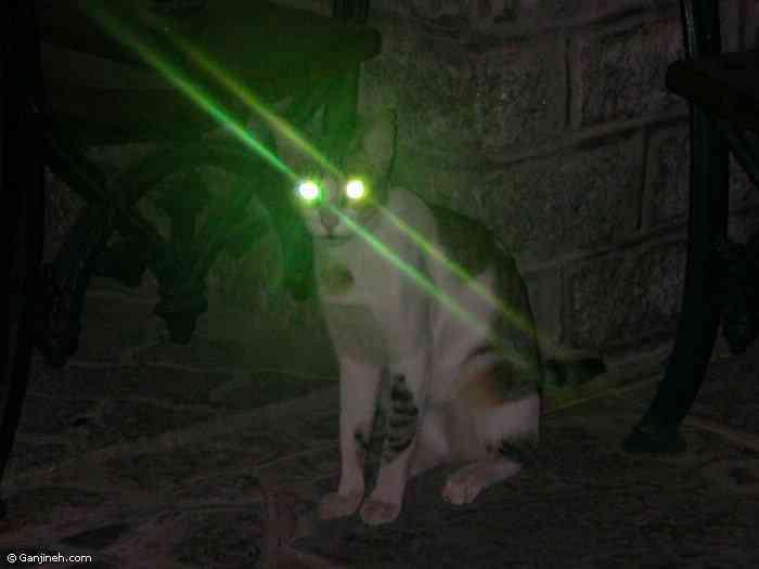 20060401104833 daily cat eyes Foto gump do dia: Skunk ape, O macaco fedido da Flórida