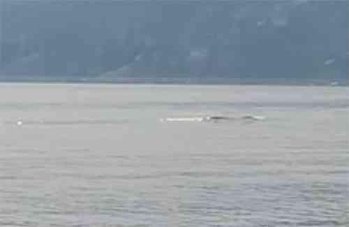 36403820 Monstro do lago Ogopogo reapareceu no Canadá