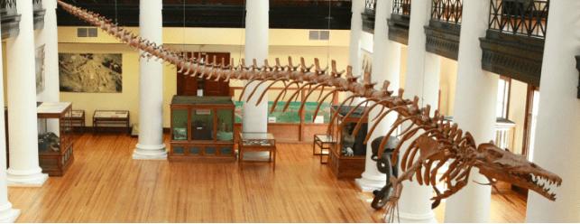 basilosaurus orig Monstro do lago Ogopogo reapareceu no Canadá