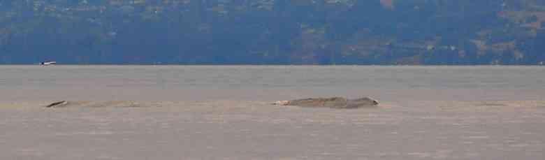 s93449487 Monstro do lago Ogopogo reapareceu no Canadá