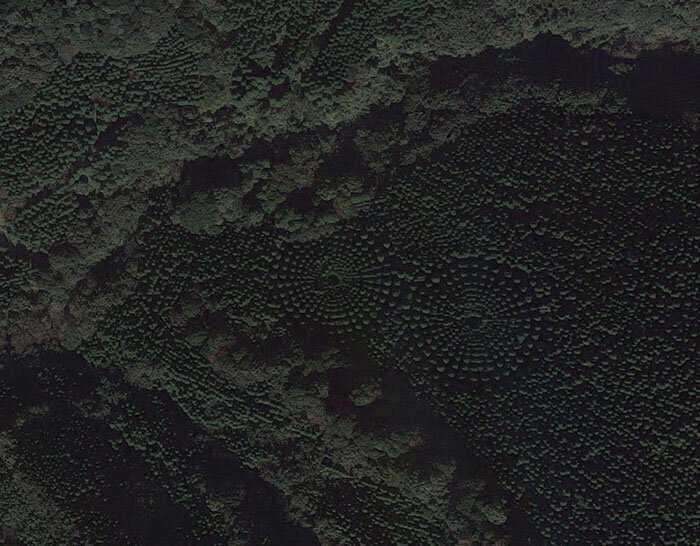 8b43c707561181aa82c1c2c127166b7e O mistério dos Incríveis círculos vegetais