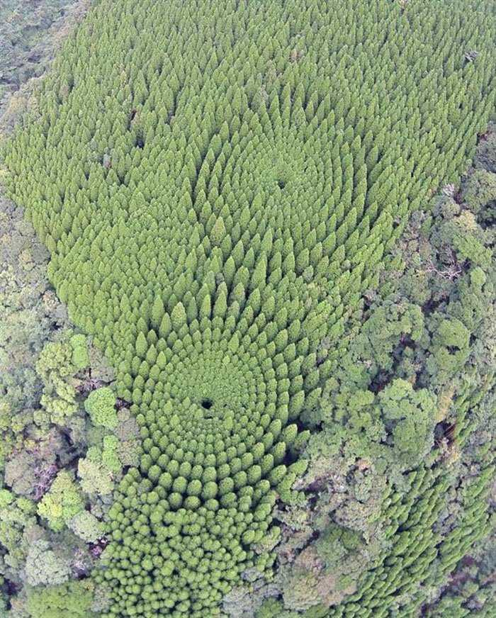 b1aea9f3efb042d8f5713dd92f4ab397 O mistério dos Incríveis círculos vegetais