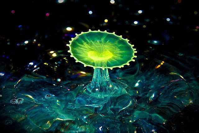 377608large neon water A beleza da água numa fração de segundo