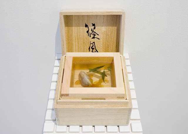 7149066592924257 371d6c4a67 z Riusuke Fukaori, o criador de peixinhos