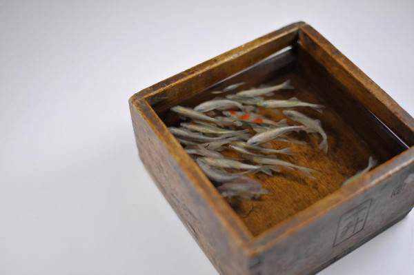 714906goldfish 1 600x399 Riusuke Fukaori, o criador de peixinhos