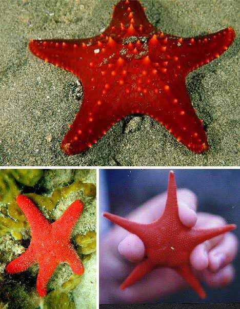 966890red animals 33 Animais vermelhos