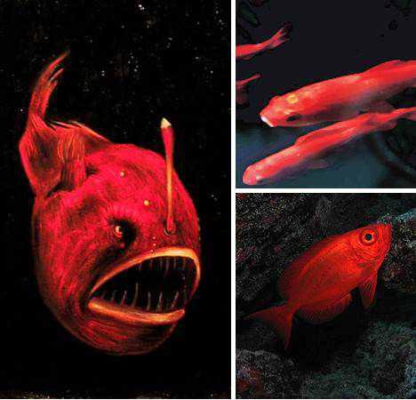 966890red animals 5 Animais vermelhos
