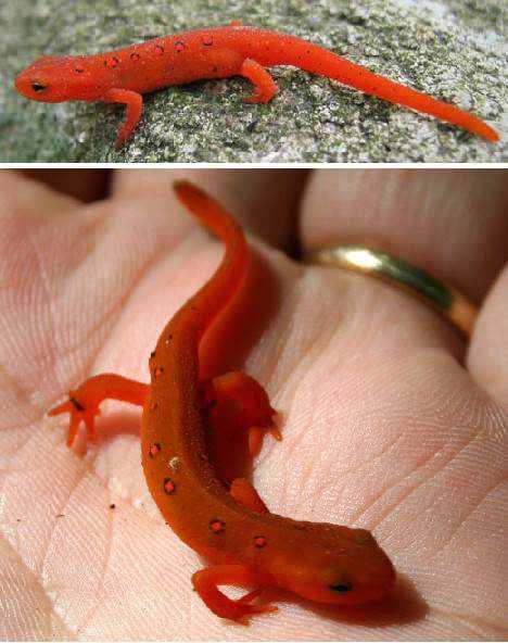 966890red animals 6 Animais vermelhos