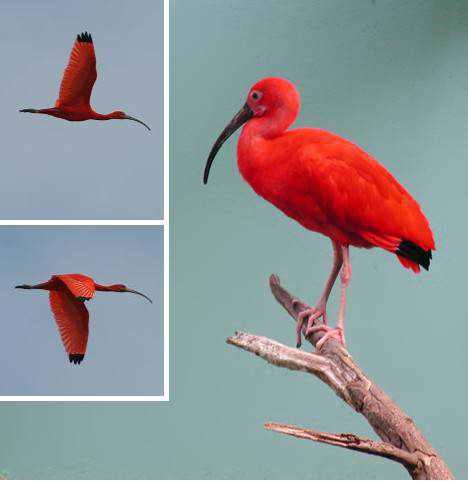 966890red animals 9a2 Animais vermelhos