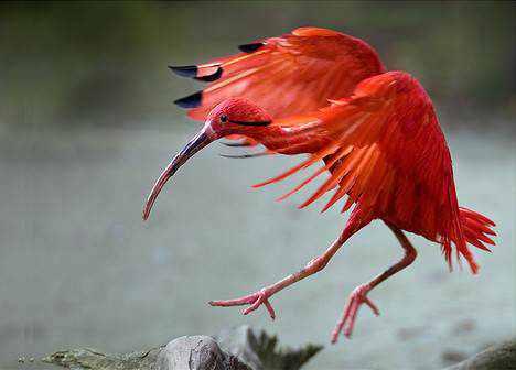 966890red animals 9x2 Animais vermelhos