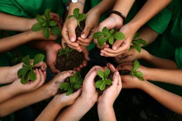 mãos de crianças segurando mudas de plantas