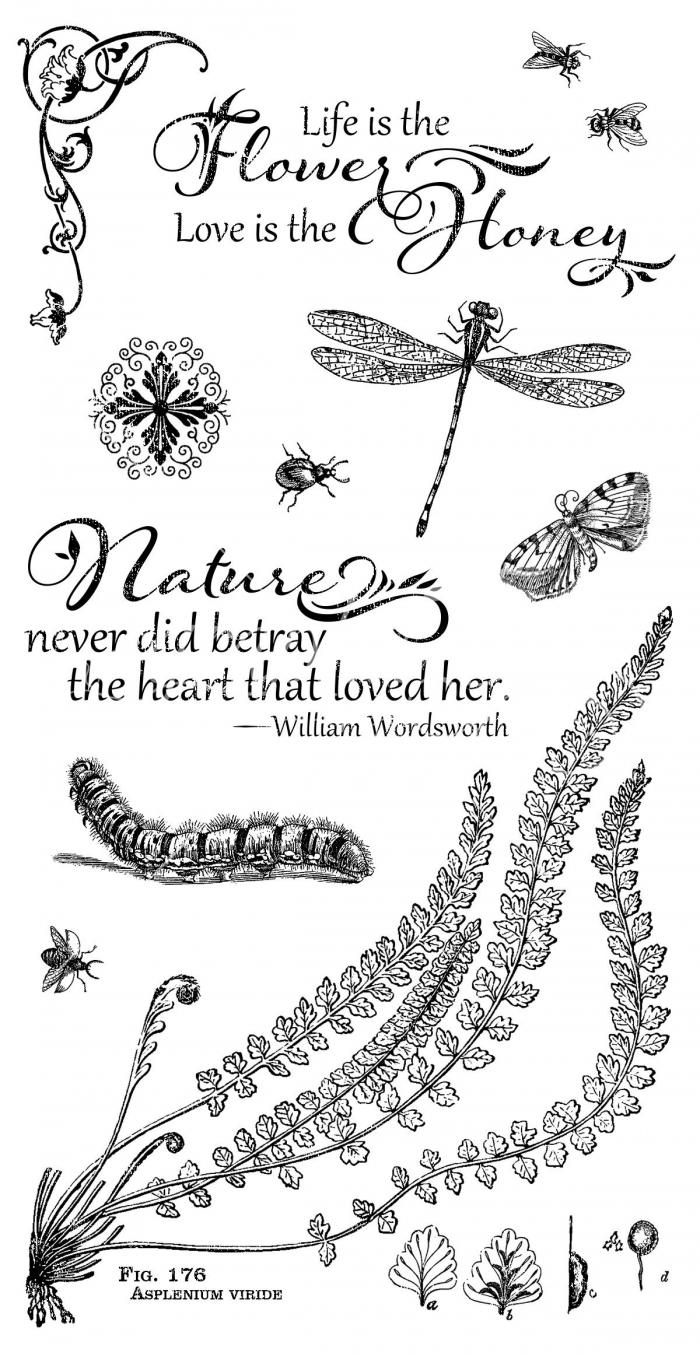 Carimbo Coleção Nature Sketchbook 2 - Graphic 45