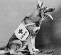 Cães famosos existiram e continuam a existir, como o herói Rin-Tin-Tin, astro hollywodiano que encantou milhares de crianças e adultos