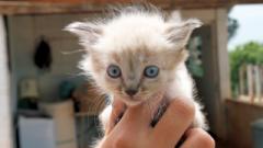 Na cidade, para adotar um gatinho pode ir até a sede da União Protetora dos Animais, a UIPA