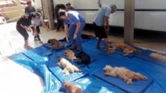 A castração é importante para diminuir o abandono e, consequentemente, o número de animais de rua, mutirão será nos dias 2 e 3 de julho