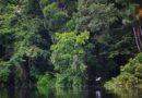 A Amazônia: Bem Comum da Terra e da Humanidade