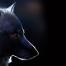   Studios Lone wolf