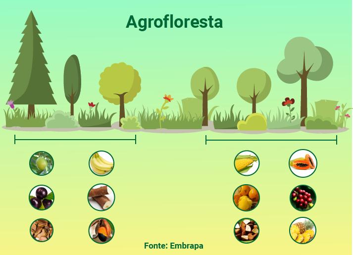 A agrofloresta, segundo a Embrapa, tem como característica marcante a reciclagem mais eficiente dos nutrientes