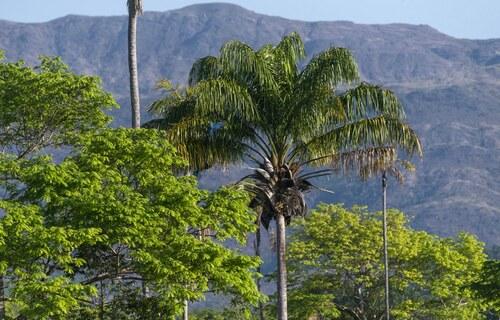 Foto: Serviço Florestal Brasileiro