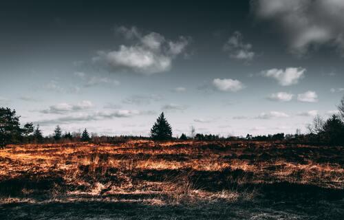 Foto: Matthis Volquardsen (Pexels)