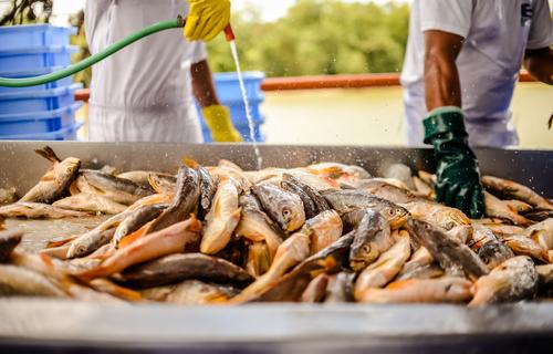 Foto: divulgação/ REDES-Fiepa