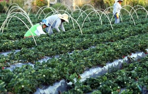 Agricultura Familiar - Foto: Valter Campanato/ ABr