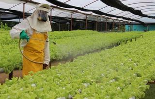 Foto: Instituto de Desenvolvimento Agropecuário e Florestal Sustentável do Amazonas (Idam)