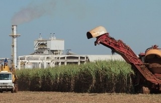 Foto: Notícias Agrícolas
