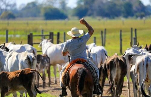 Crédito Pantanal - Foto: Governo Federal