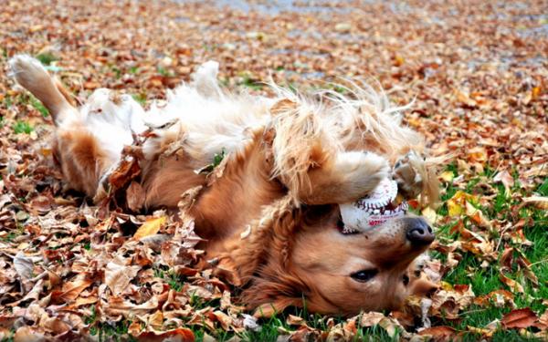 Cães se divertem pelo simples motivo de se divertir.