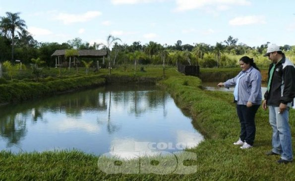 Prev n construir 200 estanques para cr a de peces en for Peces para criadero