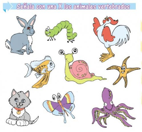 Animales vertebrados - Edicion Impresa - ABC Color