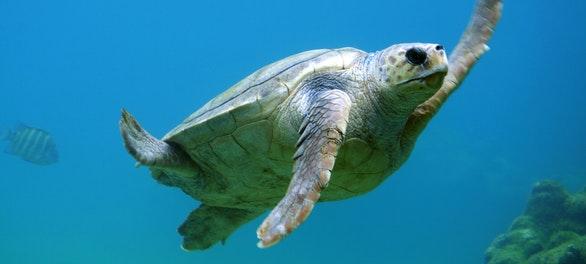 Día Mundial de los Océanos: 7 acciones para cuidar el mar