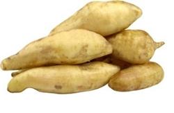 BATATA YACON kg