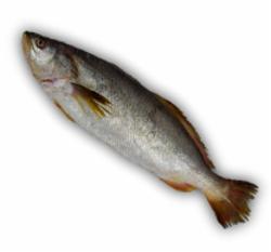 Peixe Fresco Pescada Branca Inteira  kg