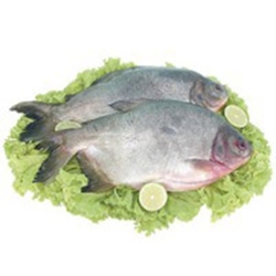 Peixe Fresco Pacu Int kg