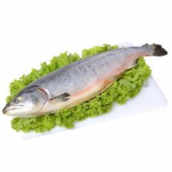 Peixe Fresco Tilapia Int kg (P)