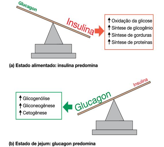Balança glucagon versus insulina