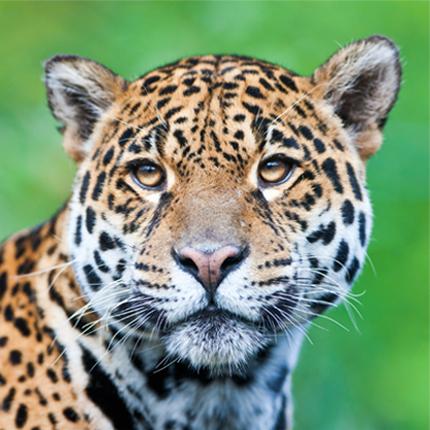 Resgate e Monitoramento de Fauna
