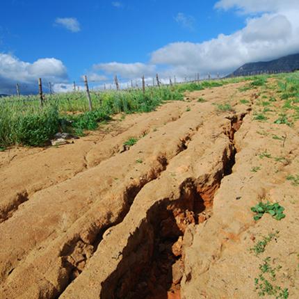 Projetos de Recuperação de Áreas Degradadas (PRAD)