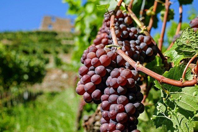 Grapes 2672886 640